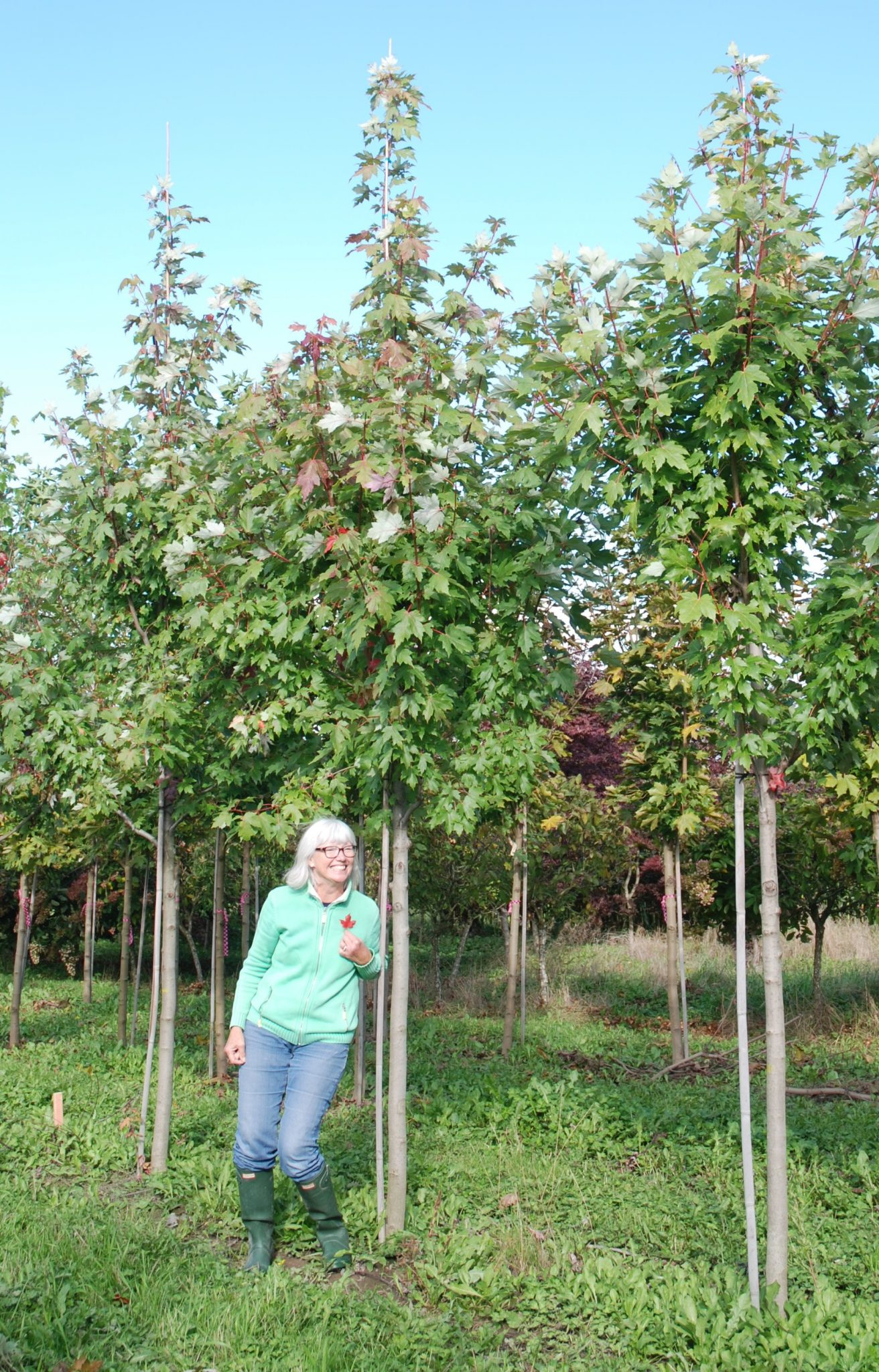 Rotary Club of Chilliwack announces 85 FOR 85 commemorative tree planting