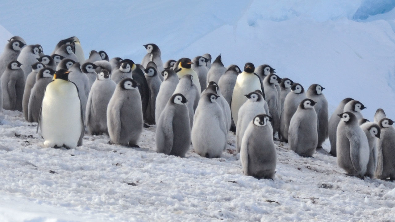 Cooped up at home? You can help scientists spot penguins from space or seek out new galaxies.